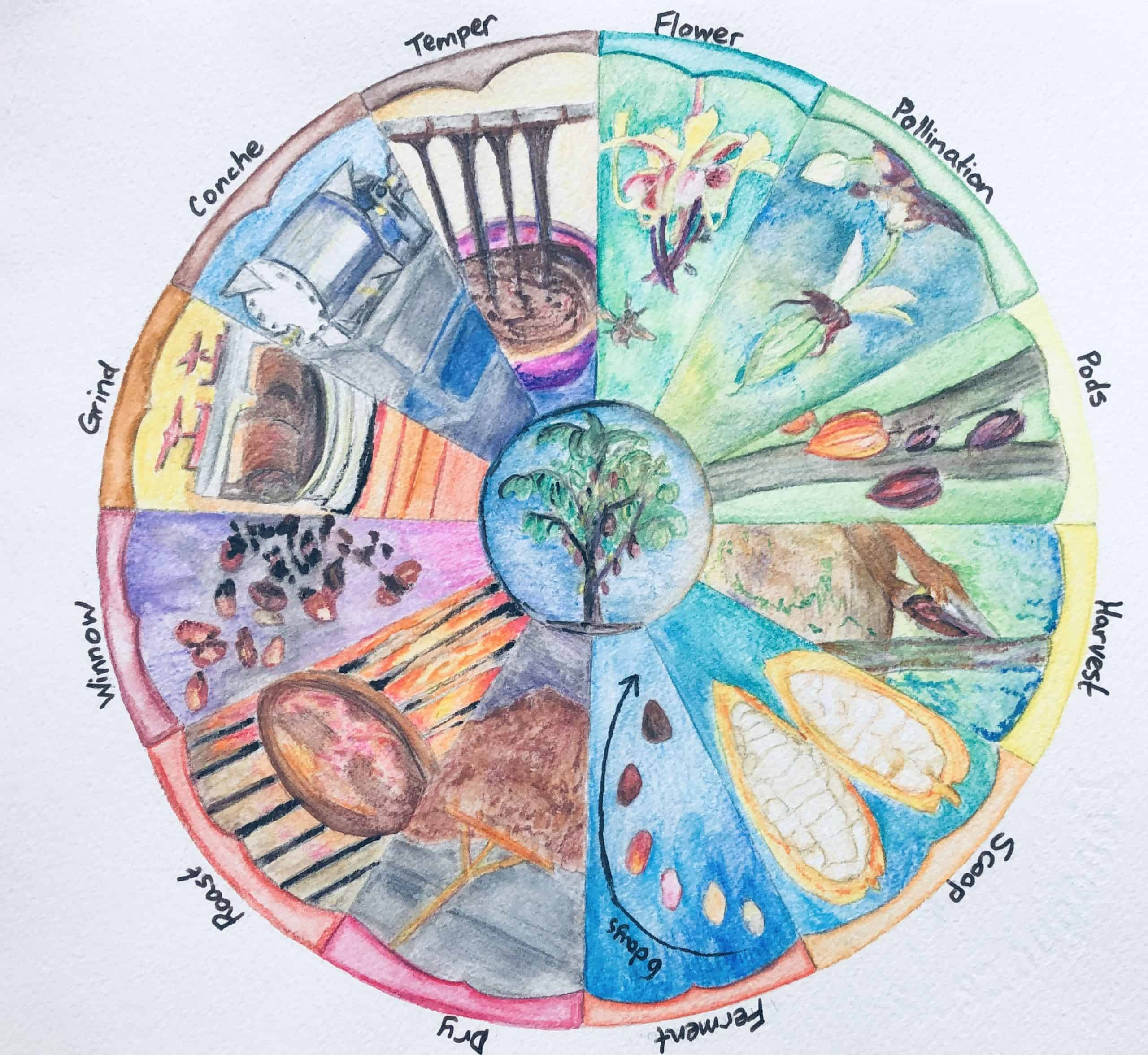 Phrenology Wheel of Cacao to Chocolate - watercolour painting by World Tree Chocolate